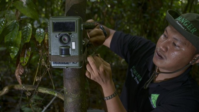 Namun luas kawasan hutan yang ada di Subulussalam semakin terancam akibat eksistensi kebun sawit.