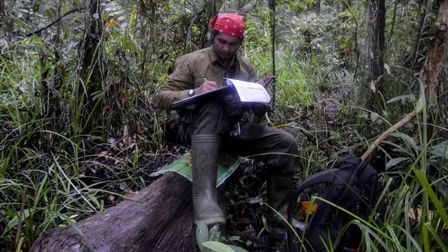 Penanaman pohon kelapa sawit yang tidak sesuai aturan, mengancam keseimbangan ekosistem dan akan berujung pada bencana seperti banjir dan longsor.