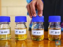 Pemerintah Dorong Pengembangan Biofuel, Ini Road Map-nya