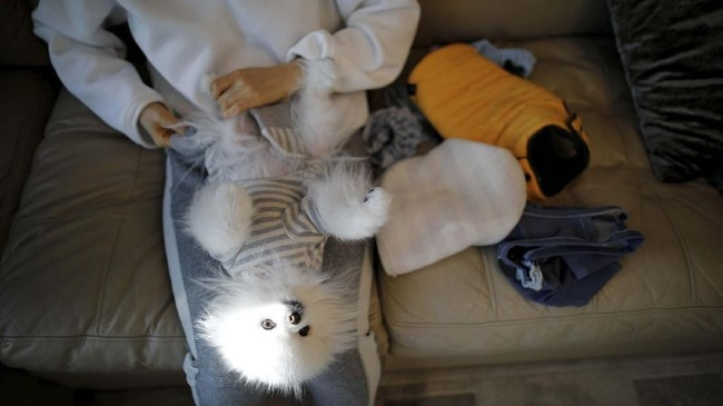 Tak cuma itu, dia juga mendandani anjingnya dengan baju senilai US$50 setiap kali Imlek tiba dan mereka harus berkunjung ke rumah ibunya. (REUTERS/Kim Hong-Ji)