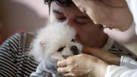 FOTO: Saat Warga Korea Lebih Pilih Anjing daripada Punya Anak