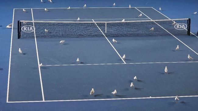 Burung-burung berada di lapangan tenis di Australia Terbuka. (REUTERS/Aly Song)