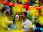 Melihat Indahnya Bunga Dahlia Jelang Perayaan Imlek