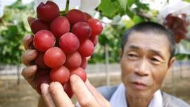 Mengambil Manfaat Tersembunyi Biji Anggur