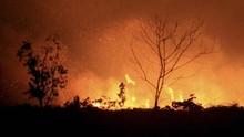 BNPB Sebut Urusan Perut Penyebab Utama Karhutla