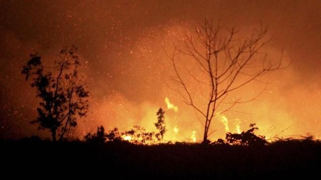 Kebakaran lahan gambut terjadi di beberapa desa di Kecamatan Johan Pahlawan, Aceh Barat, Aceh. (ANTARA FOTO/Syifa Yulinnas)