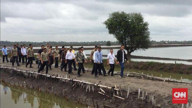 Kena Patil Udang, Tangan Jokowi Berdarah saat Panen di Bekasi