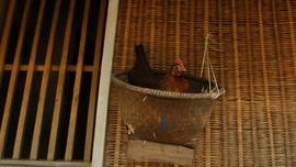 Moeldoko Usul 1 Keluarga Pelihara Ayam untuk Atasi Stunting