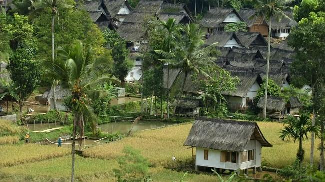 Warga merontokkan padi saat panen raya di Kampung Naga, Kabupaten Tasikmalaya, Jawa Barat. (ANTARA FOTO/Adeng Bustomi)