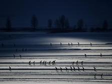Wuzz.. Serunya Perlombaan Seluncur Es Terpanjang di Dunia