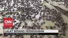 Ribuan Lalat 'Serang' Pemukiman
