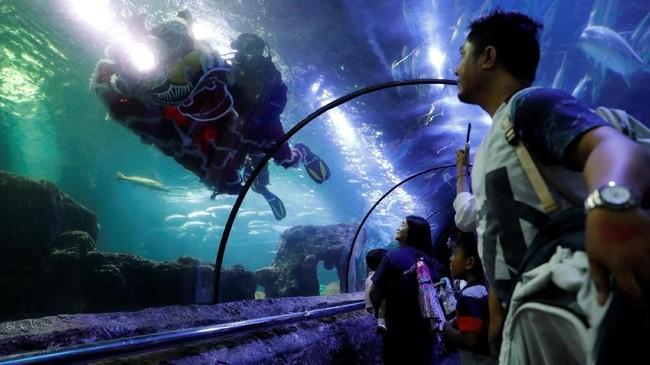 Di Sea World Jakarta, para penyelam menampilkan tarian singa bagi para pengunjung dari dalam air. (REUTERS/Willy Kurniawan)