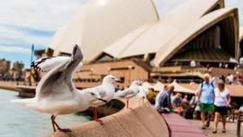 Menghindari Serangan Burung Camar saat di Pantai