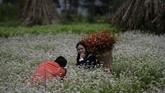 Etnis Hmong pun merasa mereka dipaksa oleh ide-ide pemerintah yang diyakini didasarkan pada kepentingan ekonomi semata. Namun tak bisa dipungkiri, lebih dari 60 persen dari satu juta etnis Hmong di Vietnam hidup di bawah garis kemiskinan. (Nhac NGUYEN / AFP)