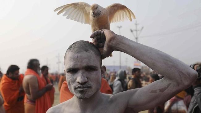 Seorang pemuka agama Hindu (Naga Sadhu) meninggalkan tempat diselenggarakannya mandi suci di Prayagraj, India, sementara seekor burung merpati duduk di atas kepalanya. (REUTERS/Anushree Fadnavis)