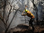 Cuaca Panas, 2.300 Hektare Hutan di Selandia Baru Terbakar