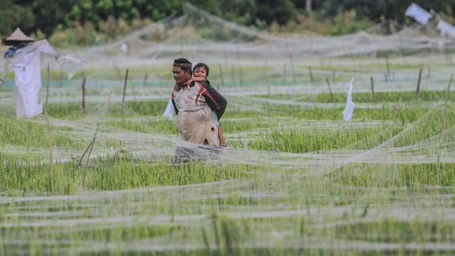 Kepala BPS Suhariyanto mengatakan kenaikan harga beras sejalan dengan kenaikan harga gabah, yang memang kerap terjadi sebelum memasuki masa panen pada bulan ini.(ANTARA FOTO/Syifa Yulinnas).