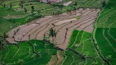 Berdasarkan data Kementan, secara nasional, produksi padi mencapai 83,04 juta ton GKG atau setara 48,3 juta ton beras di sepanjang tahun lalu. Dengan konsumsi, 30,4 juta ton beras.(ANTARA FOTO/Aji Styawan).
