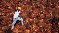 Luhut Sebut Industri Sawit Kebal Corona, Kok Bisa?