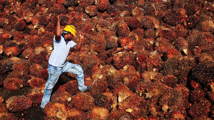 FILE PHOTO - A worker collects palm oil fruit inside a palm oil factory in Sepang, outside Kuala Lumpur February 18, 2014. REUTERS/Samsul Said/File Photo   GLOBAL BUSINESS WEEK AHEAD