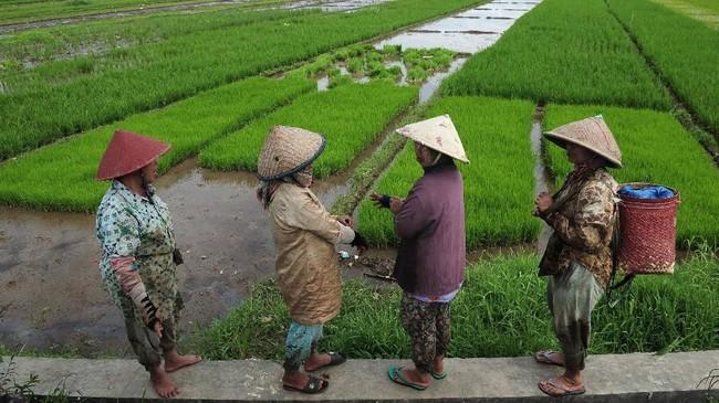 Kendati data produksi dan konsumsi beras Kementan tercatat surplus pada tahun lalu, kenyataannya pemerintah getol impor beras. Buktinya, sepanjang tahun lalu, pemerintah telah menerbitkan tiga kali izin impor beras dengan total volume 2 juta ton beras.(ANTARA FOTO/Wahdi Septiawan).