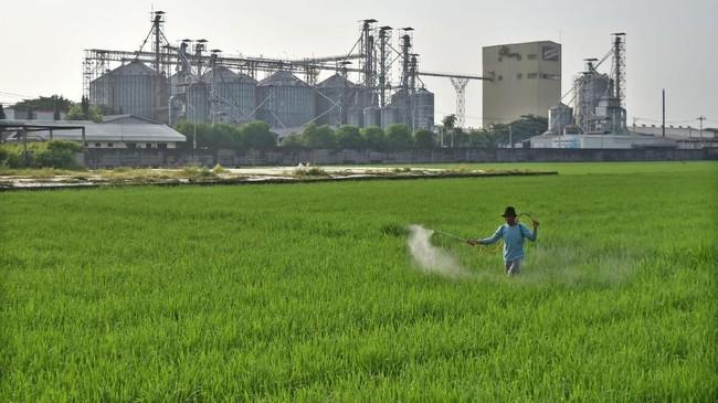 Saat ini, Dirut Perum Bulog menuturkan gudang Bulog terisi 2,1 juta ton beras. Dengan kondisi ini, Bulog hanya mampu menyerap 1,8 juta ton beras dari hasil panen raya.