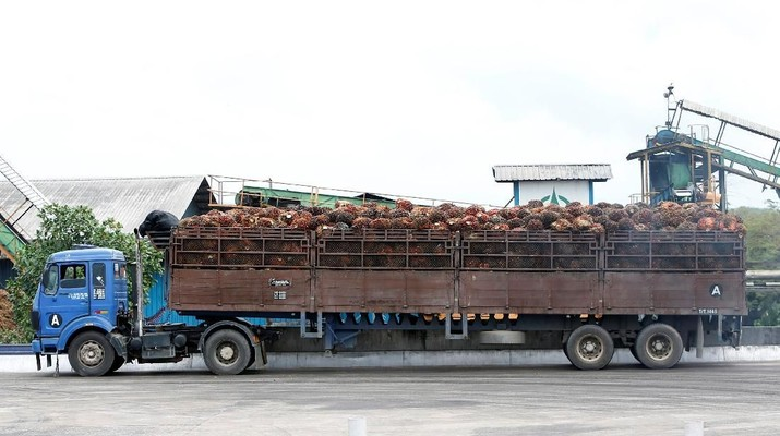 A worker unloads palm oil fruit bunches from a lorry inside a palm oil mill in Bahau, Negeri Sembilan, Malaysia January 30, 2019.  Picture taken January 30, 2019.  REUTERS/Lai Seng Sin