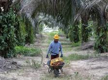 Uni Eropa Diskriminasi CPO, Ini Langkah RI-Malaysia-Kolombia