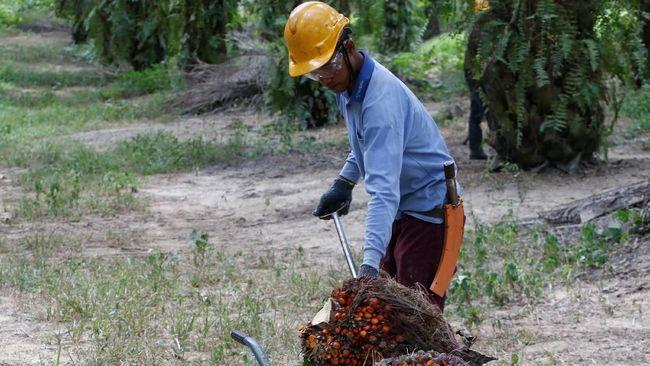 LSIP SIMP Kelabu di 2018, Mungkinkan Industri Sawit RI Bangkit di 2019?