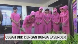 Cegah DBD dengan Bunga Lavender