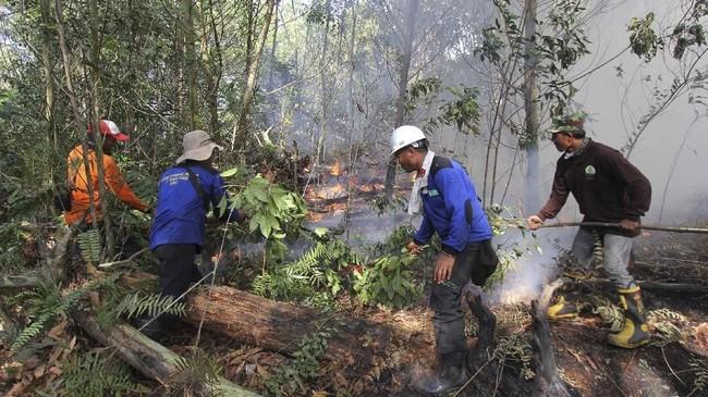 Petugas Manggala Agni memadamkan sisa api yang membakar semak belukar dan pepohonan akasia di kawasan hutan konservasi, Medang Kampai, Dumai, Riau, 3 Februari 2019. (ANTARA FOTO/Aswaddy Hamid)