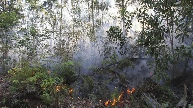 Api membakar semak belukar dan pepohonan akasia di kawasan hutan konservasi, Medang Kampai, Dumai, Riau, 3 Februari 2019. BMKG Stasiun Pekanbaru mendeteksi 49 titik panas sebagai indikasi terjadinya kebakaran lahan dan hutan di Provinsi Riau. (ANTARA FOTO/Aswaddy Hamid)