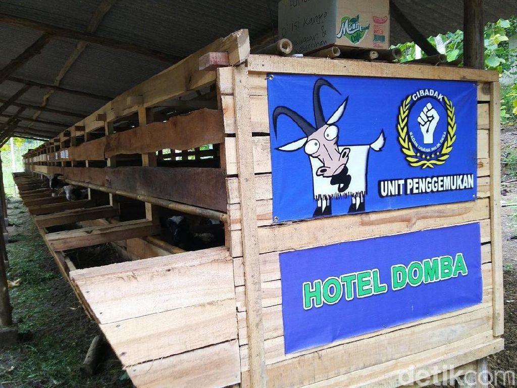 Yang Baru di Ciamis, 'Hotel' Buat Domba
