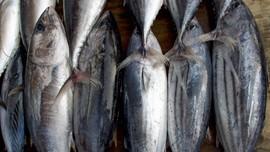 Manfaat Kesehatan Mengonsumsi Ikan Tongkol