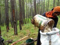 Terungkap! Sejarah Prabowo Kuasai Lahan 120 Ribu Hektare di Aceh