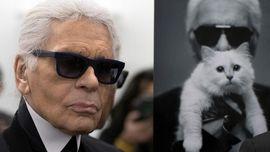 Choupette, Kucing 'Artis' Kesayangan Karl Lagerfeld