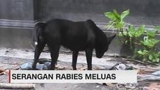 Serangan Rabies di NTB Meluas
