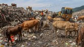 Sejumlah pemulung mencari barang bekas di Tempat Pembuangan Akhir (TPA), kawasan Air Dingin, Padang, Sumatera Barat, Senin (14/1). Sampah yang masuk ke TPA Air Dingin mencapai 500 ton per hari dan diprediksi empat sampai lima tahun ke depan kapasitas TPA itu tak mampu lagi menampung sampah. (ANTARA FOTO/Muhammad Arif Pribadi)