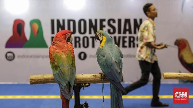 Anggota komunitas Indonesia Parrot Lovers ikut serta dalam Jakarta Indonesia Pet Show (JIPS) 2019, Jumat (22/2). (CNN Indonesia/Adhi Wicaksono)