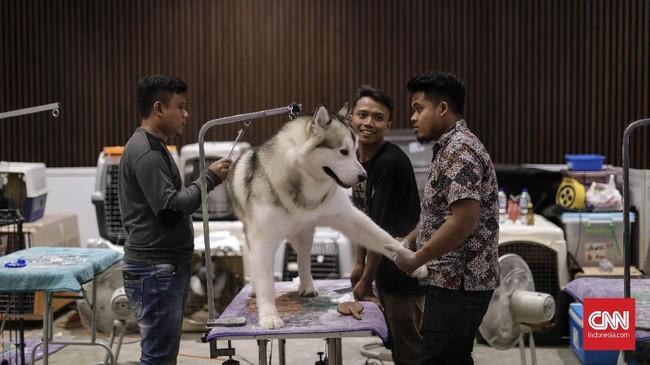 Dalam acara ini, Dinas Ketahanan Pangan, Kelautan dan Pertanian (DKPP) DKI bersama JIPS dan PT Zoetis Animal Health Indonesia akan menyediakan vaksin rabies gratis sebanyak 200 vial. (CNN Indonesia/Adhi Wicaksono)