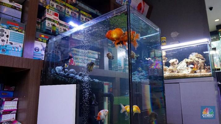 Bisnis Aquascape Bisa Cuan Rp 180 Juta/Bulan, Caranya?