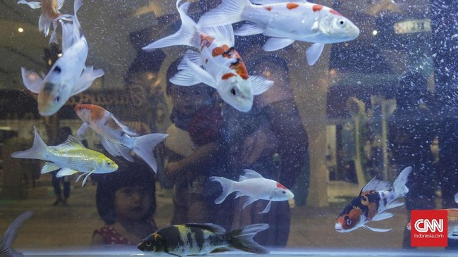 Yang spesial di pameran hewan kesayangan ini adalah para pengunjung diperbolehkan membawa berbagai hewan kesayangan miliknya (pets are welcome) sambil menikmati pameran. (CNN Indonesia/Adhi Wicaksono)