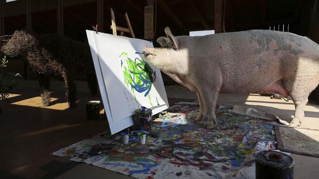 Pelukis yang satu ini sangat tidak biasa. Ia tidak menorehkan cat dan kuas ke kanvas dengan tangan, melainkan mulut. Lebih istimewa lagi, ia bukan manusia, melainkan babi. (REUTERS/Sumaya Hisham)