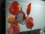 Ini Dia! 10 Ikan Hias Buat Aquascape Jadi Tambah Cantik