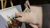 Kelamaan, ketahuan bahwa babi itu suka pensil dan kuas. Itu adalah dua hal yang tak ia makan. Ia lantas diajari menorehkannya dengan mulutnya ke atas kuas. (REUTERS/Sumaya Hisham)
