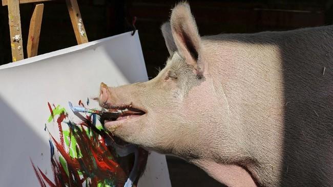FOTO: Torehan Kuas Pigcasso, Babi Pelukis dari Afrika Selatan