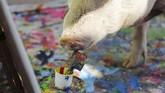 Lukisan-lukisan Pigcasso disebut beraliran abstrak. Warna-warni yang ia hasilkan membuat takjub, apalagi setelah tahu bahwa pelukisnya seekor babi. (REUTERS/Sumaya Hisham)