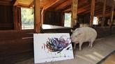 Babi pelukis itu sudah terkenal dan berhasil menjual banyak lukisan dengan harga ribuan euro. Ia bahkan berkolaborasi dengan merk ternama, lukisannya dijadikan produk mereka. (REUTERS/Sumaya Hisham)