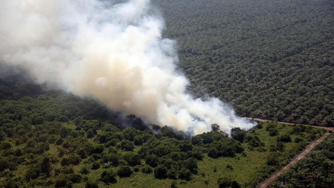 Data Badan Penanggulangan Bencana Daerah (BPBD) Riau menyebut, kebakaran lahan dan hutan yang terjadi sejak Januari hingga Februari 2019 sudah mencakup area dengan luas 1.136 hektare lebih. ANTARA FOTO/Aswaddy Hamid