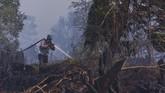 Selanjutnya Rokan Hilir tercatat 132 hektare, Dumai 60 hektare, Indragiri Hilir 38 hektare, Siak 30 hektare, Kampar 15 hektare, Pekanbaru 21,01 hektare dan Meranti 20,4 hektare. ANTARA FOTO/FB Anggoro